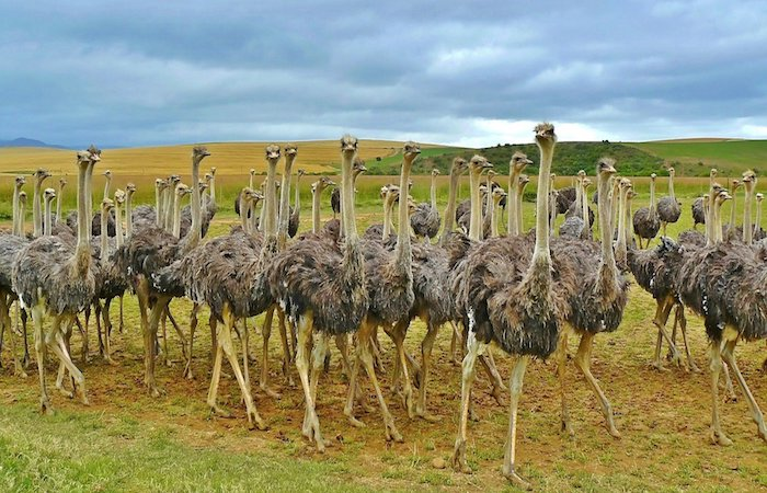 farming-tours-africa